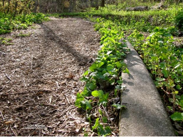 milwaukee_abandoned_beer_garden