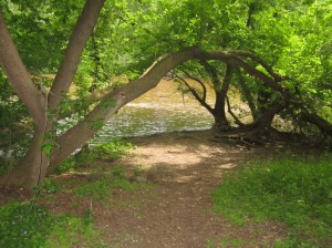 The section of Kern Park adjoining the MIlwaukee River has nearly reverted to its natural state. Photo by Carl Swanson