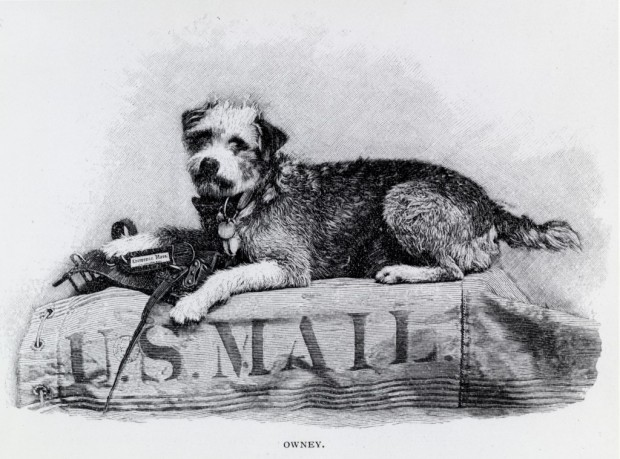 Engraving of Owney